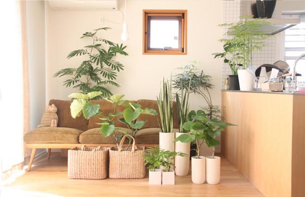 サイズ別に知る、観葉植物の種類について