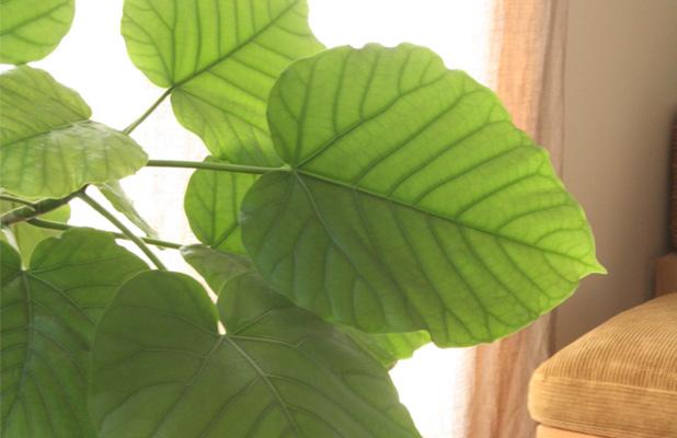 育てやすい人気の観葉植物ベスト3