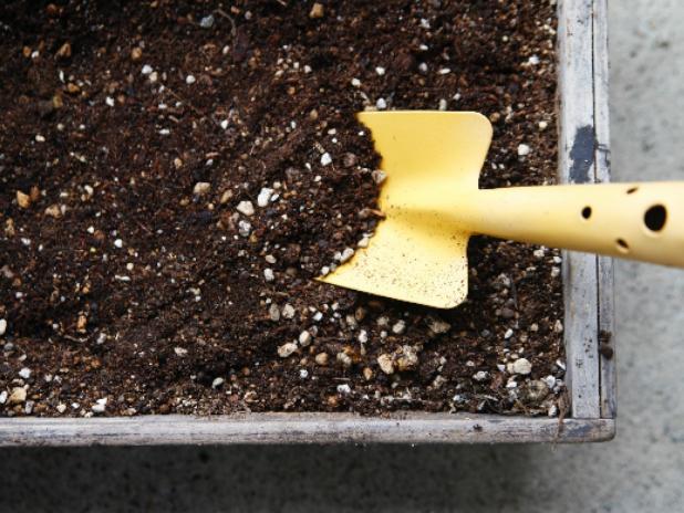 パキラの用土と肥料