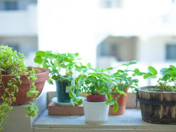 観葉植物の風水的意味
