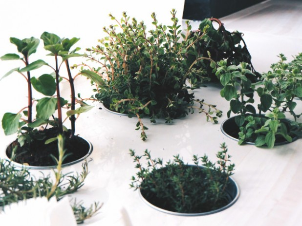 【保存版】育てやすい観葉植物ランキング!