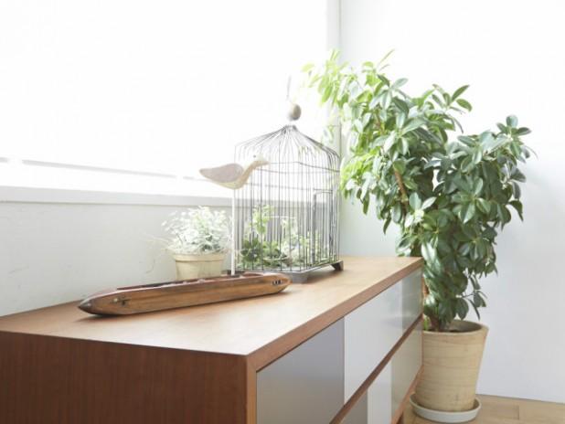 光触媒の観葉植物とは?