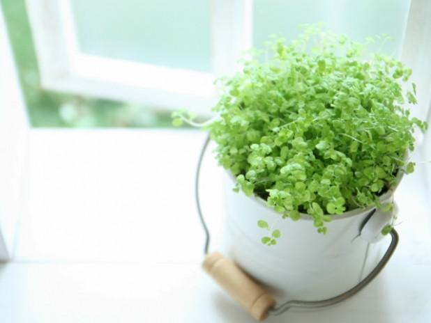 初心者におすすめ!かわいい小鉢サイズの観葉植物3選