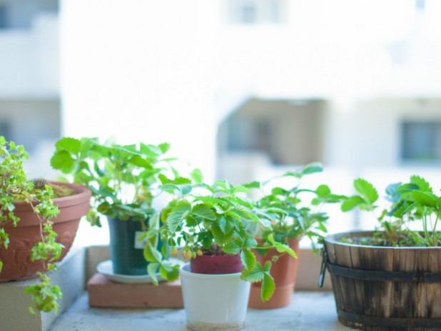 初心者にもおすすめ!ミニ観葉植物の魅力