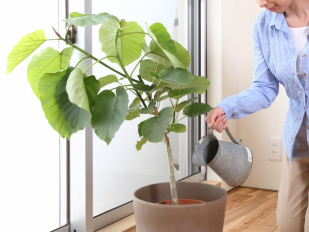 観葉植物の水やりで注意する2つのポイント