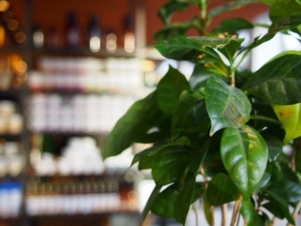 人工観葉植物と造花は風水的に効果があるの?