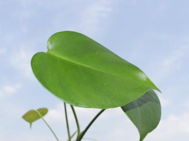 寒くても元気!耐寒性が高く冬に強い観葉植物7選