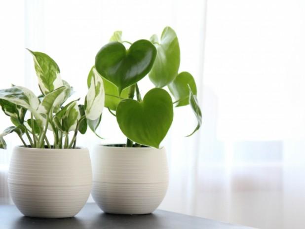 観葉植物の空気清浄効果とは