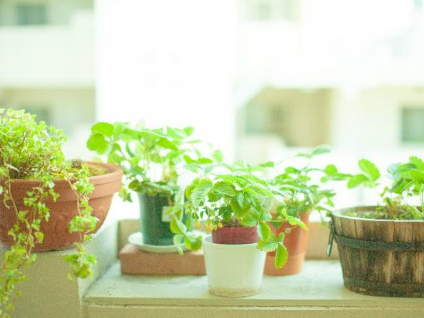 観葉植物の飾り方テクニック1