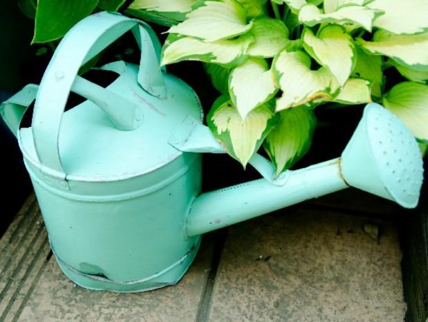 観葉植物をカビから守る育て方
