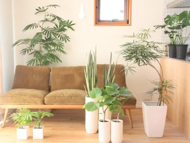 プレゼントに喜ばれる観葉植物