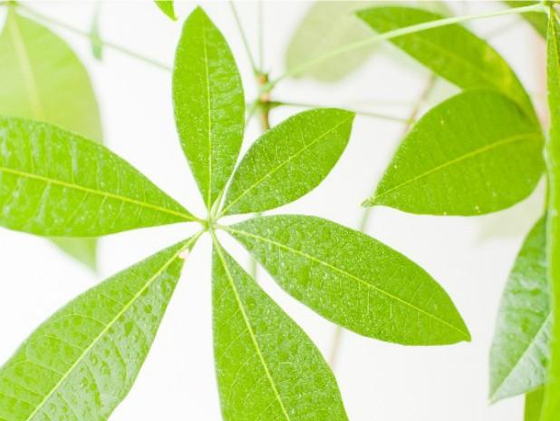 一人暮らしに最適な観葉植物