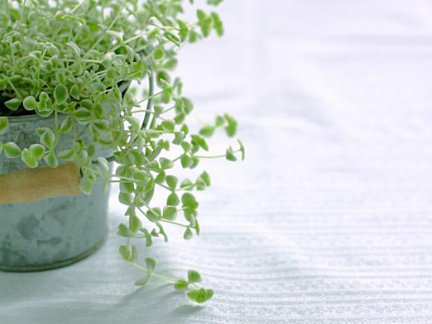 観葉植物から得られる効果とは?