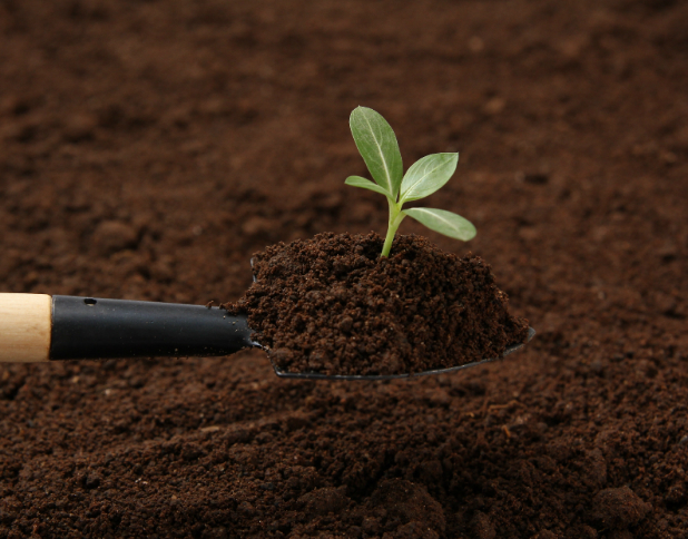 すくすく育つ!モンステラに最適な土はこれ! | 観葉植物の基礎知識|APEGO