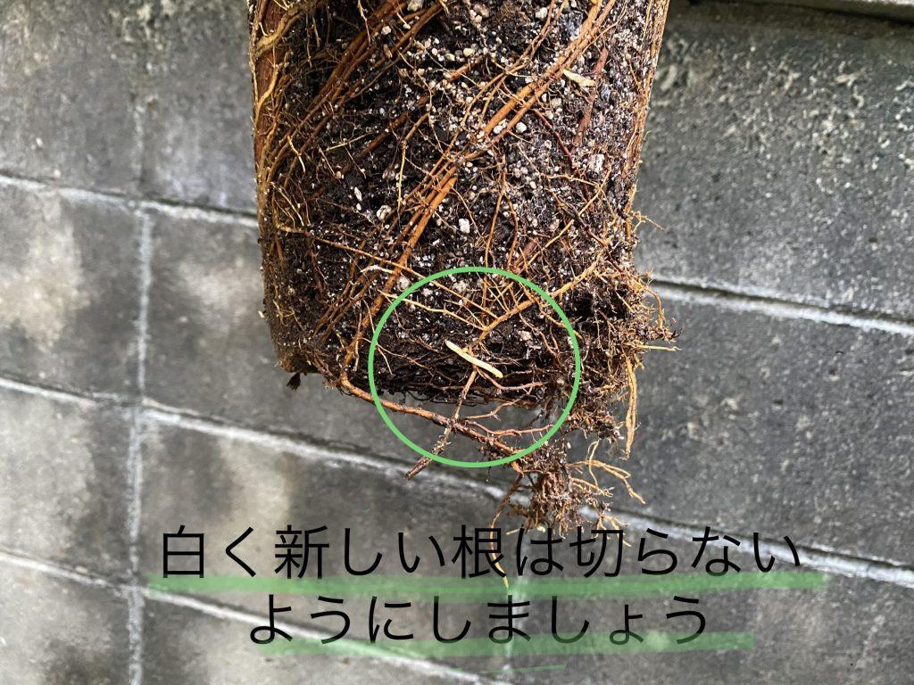 根を切るときの注意点