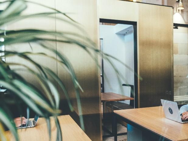 【オフィス】観葉植物を置く3つのメリットをご紹介