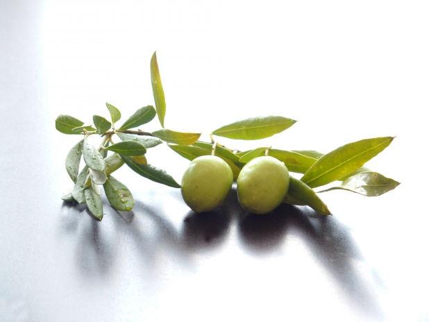 オリーブの木に秘められた2つの花言葉とは?