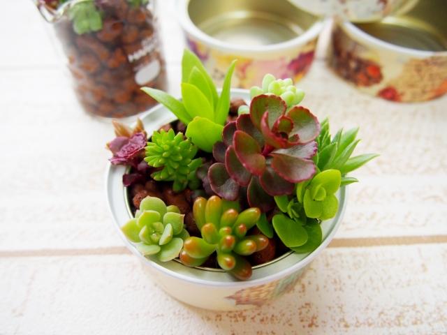 プレゼントにぴったりの多肉植物5選!