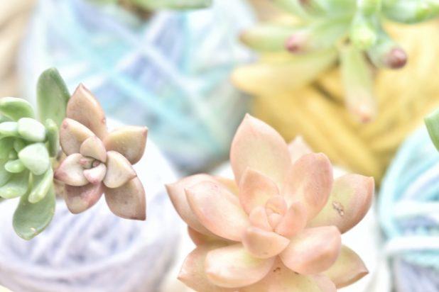 【全6種】観葉植物がもつ花言葉とその由来