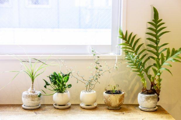 観葉植物の選び方。チェックしたい4つのポイント
