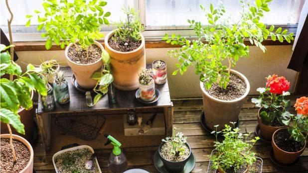 初めての観葉植物で押さえておきたいポイントとは?