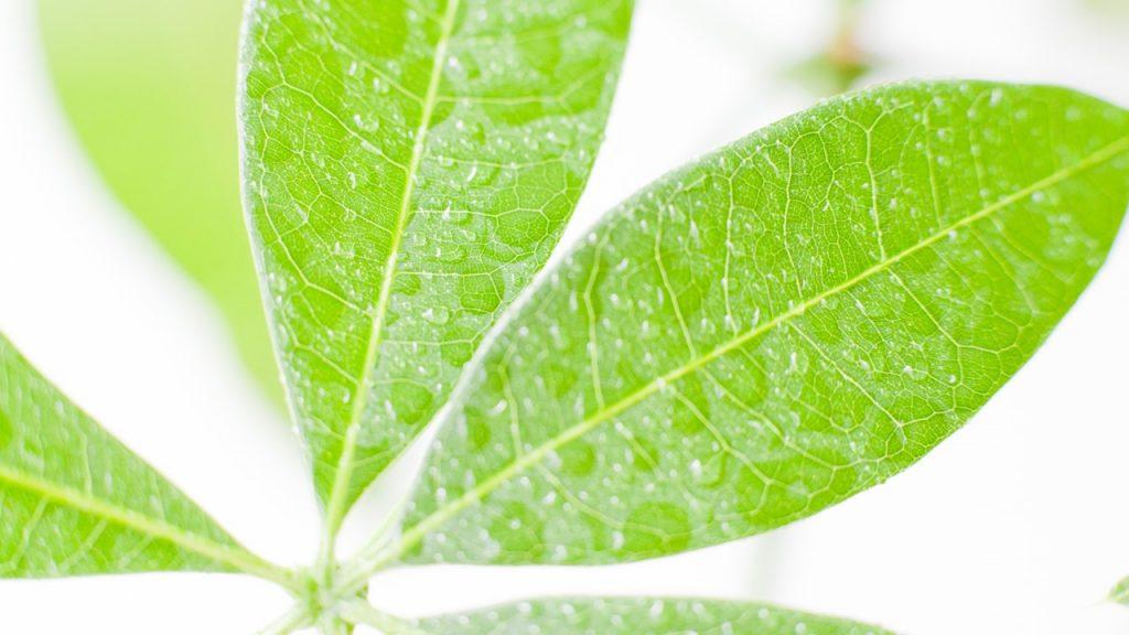 観葉植物を育てる上で葉水が大切な理由 | 観葉植物の基礎知識|APEGO