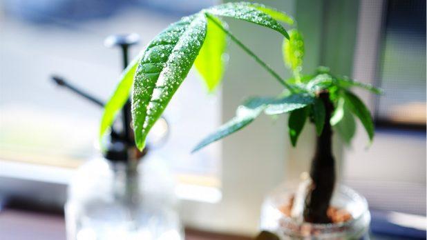 観葉植物を育てる上で葉水が大切な理由