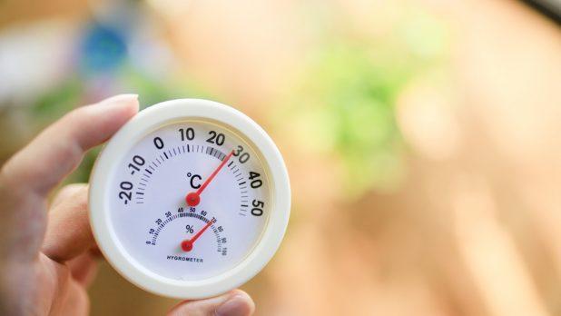観葉植物を育てるのに最適な室温は?
