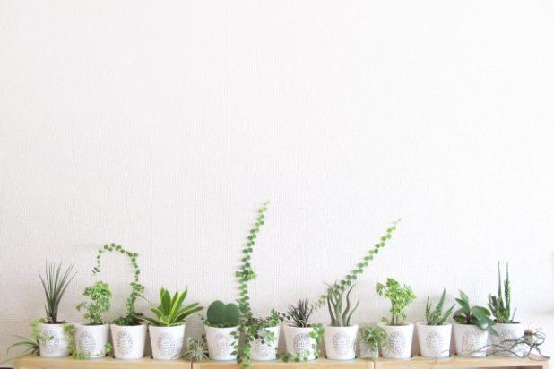 愛着の湧くおしゃれな観葉植物の紹介と飾り方