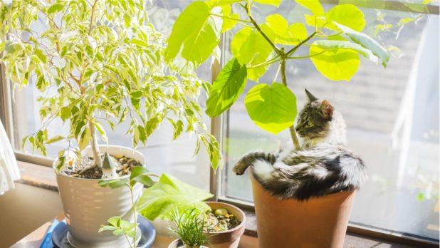 観葉植物の春から夏にかけて気をつけるポイントは?