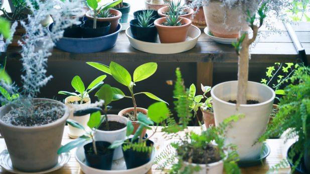 癒し効果を期待できる観葉植物3選
