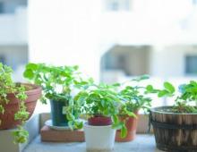 小さいサイズの観葉植物
