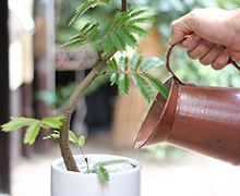育てやすい観葉植物
