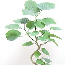 枝が分かれたり幹を曲げたりしたアートな樹形